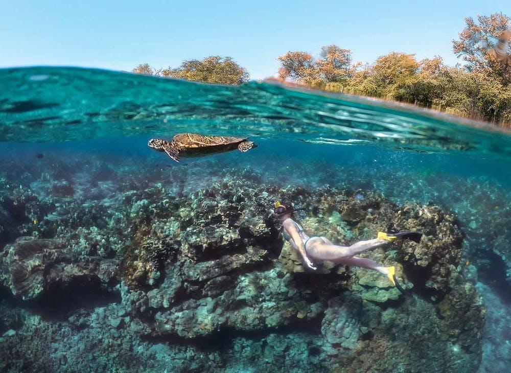 honu-Snorkeling-Shot-1500px